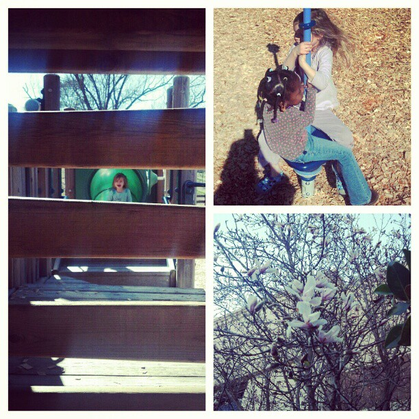 Hiding. Friends. Magnolia blossom. #fadingwinterpoetry