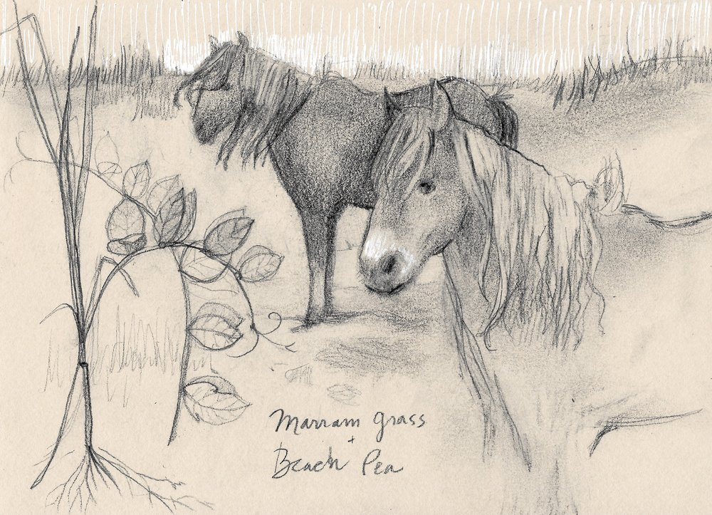 Marram Grass, Beach Pea, Sable Horses