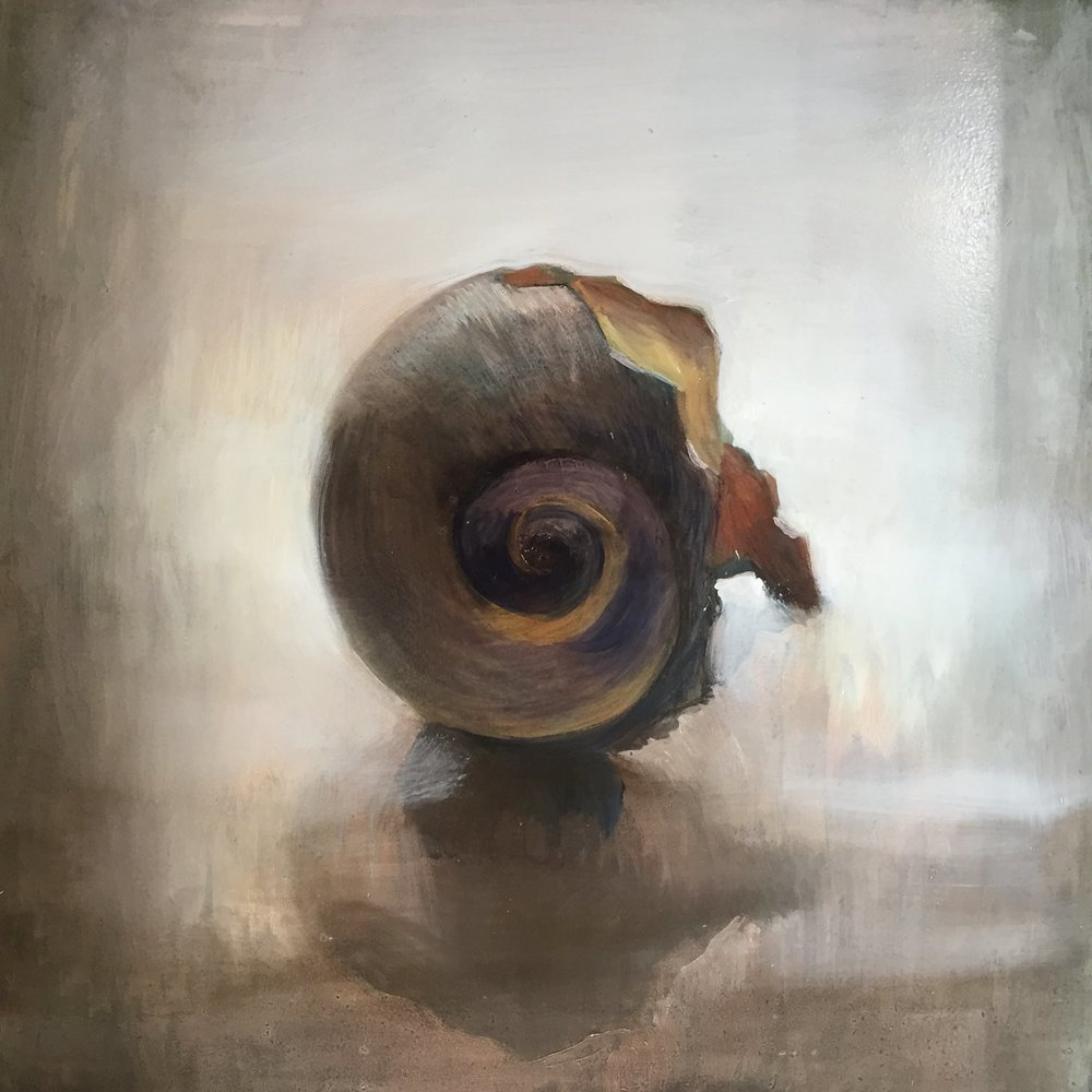 "Broken Moonsnail/ 10 x 10"" / oil on birch panel."
