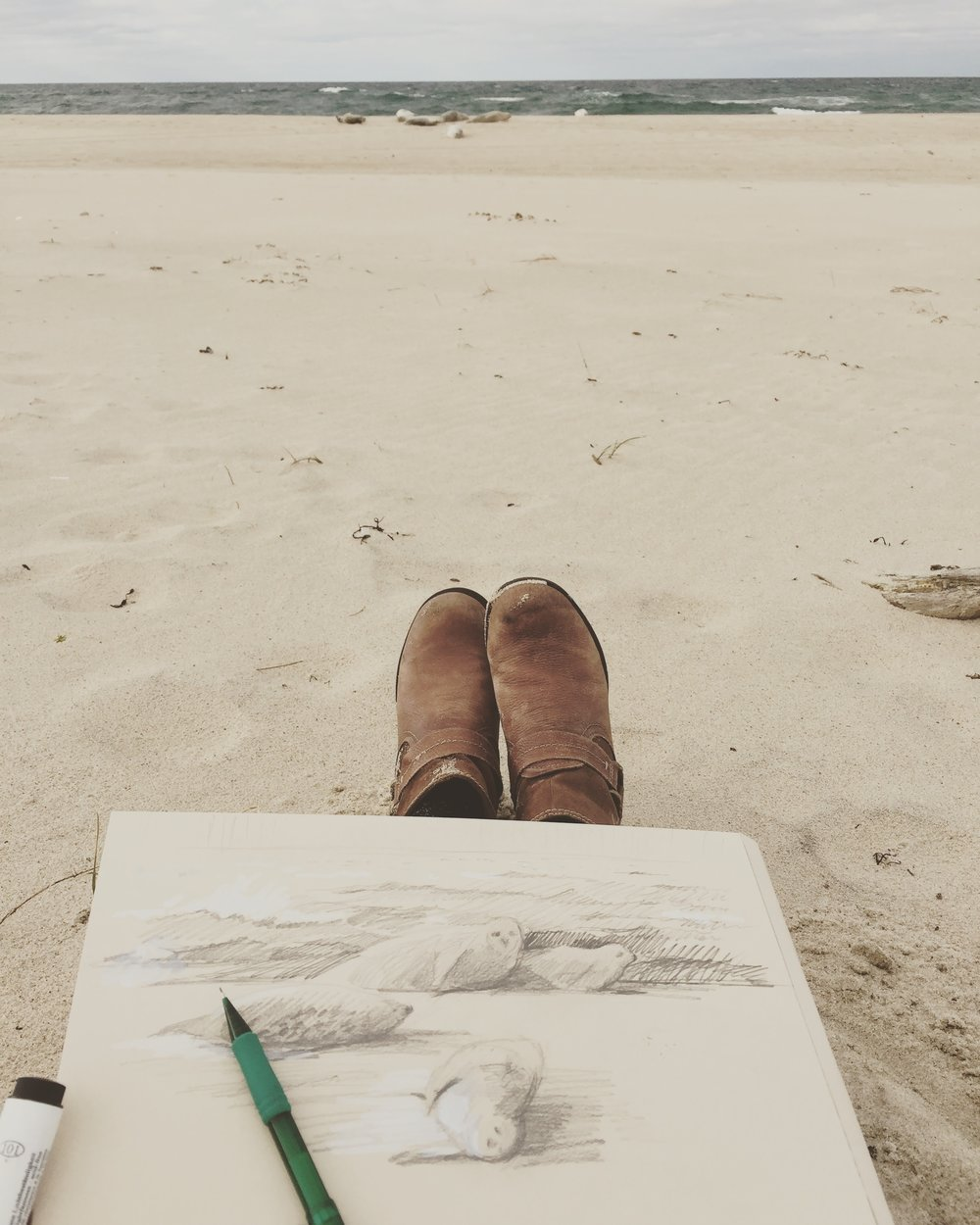 sketching seals on sable island