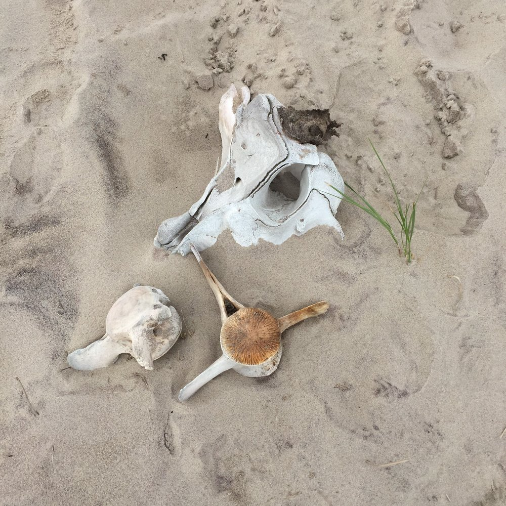 bones on sable beach