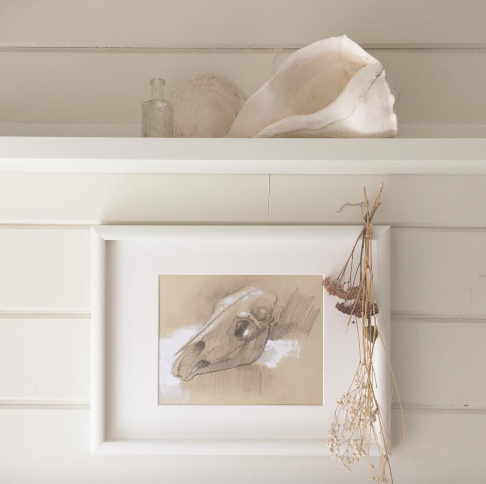 sketch from sable island institute hung in my studio with shells and things.