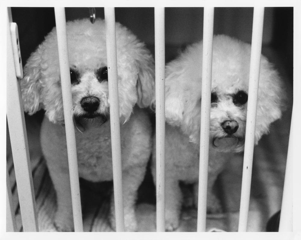 Dogs001.jpg