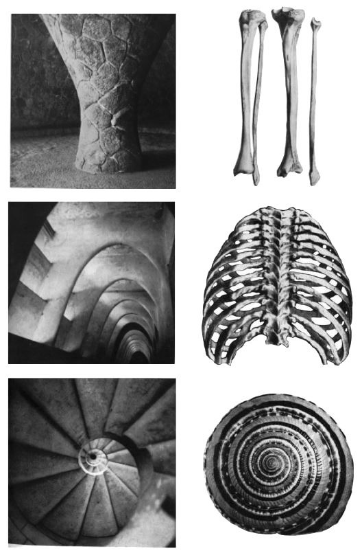 Image: Resonance with organic forms,   Antoni Gaudi, New York, 1961