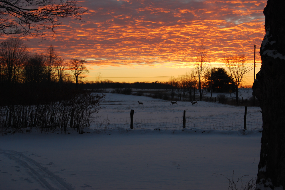 Winter Sunrise Blaze by S.Benash2.jpg