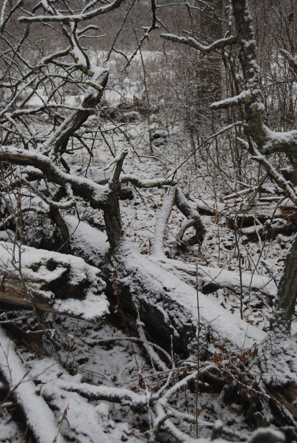 "©""Snow and Fallen Trees"" photograph by Shelita Birchett Benash"