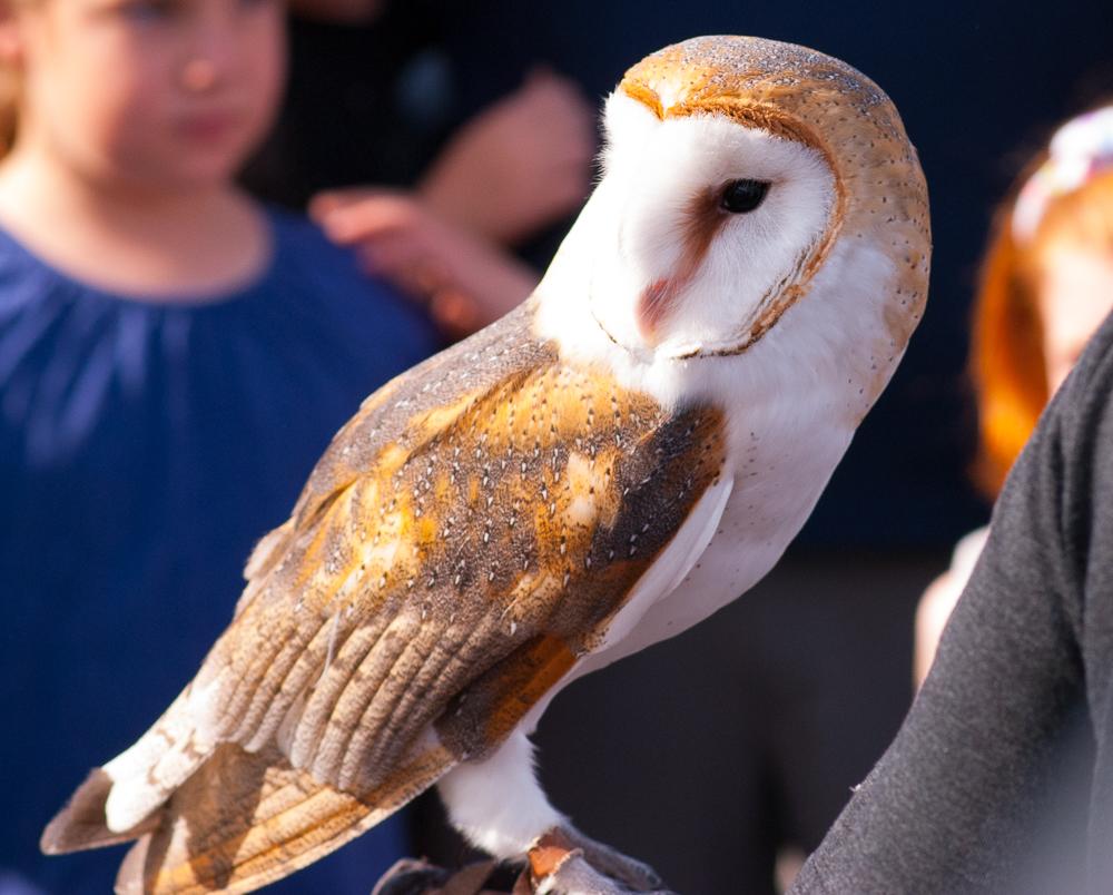 OWLS_SHELITA BIRCHETT BENASH_11.jpg