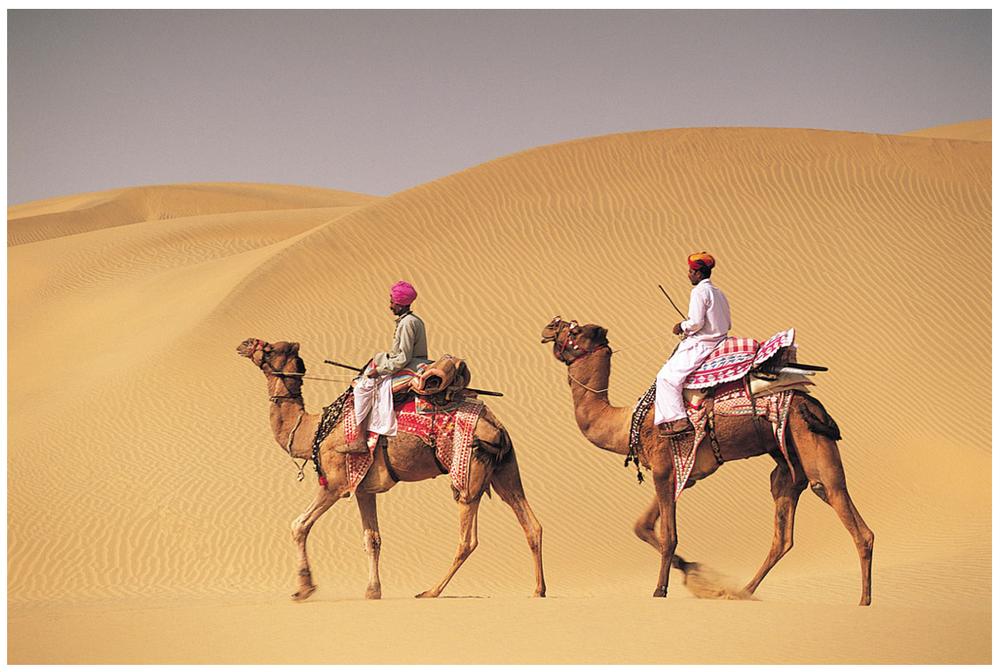 camels.png