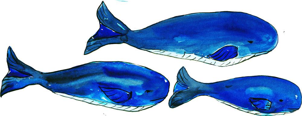 z1whales copy.jpg