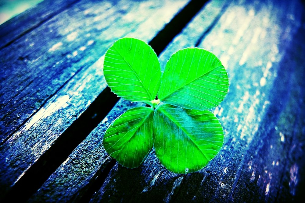 Four Leaf Clover 2.jpg