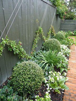 climbing plants1.jpg