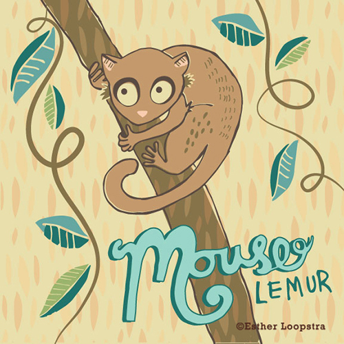 mouse_lemur_ispot_sm.jpg