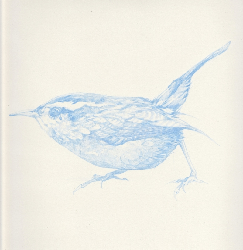 Blue Bird, Francis.jpg