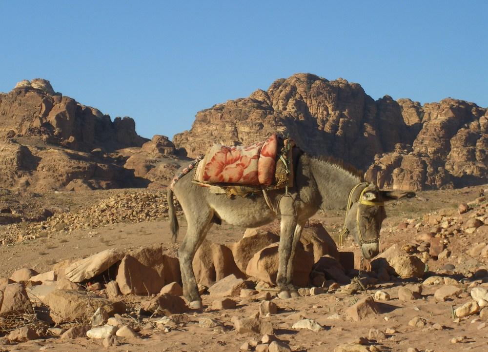WR01 0103 Aqaba-Petra.JPG