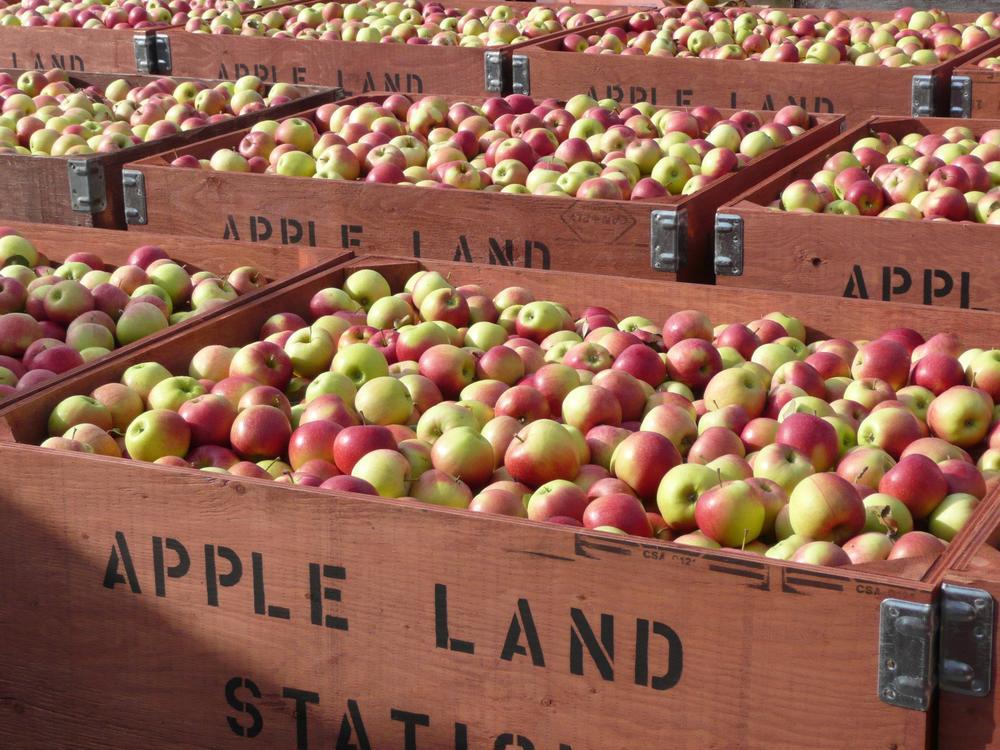 appleland.jpg