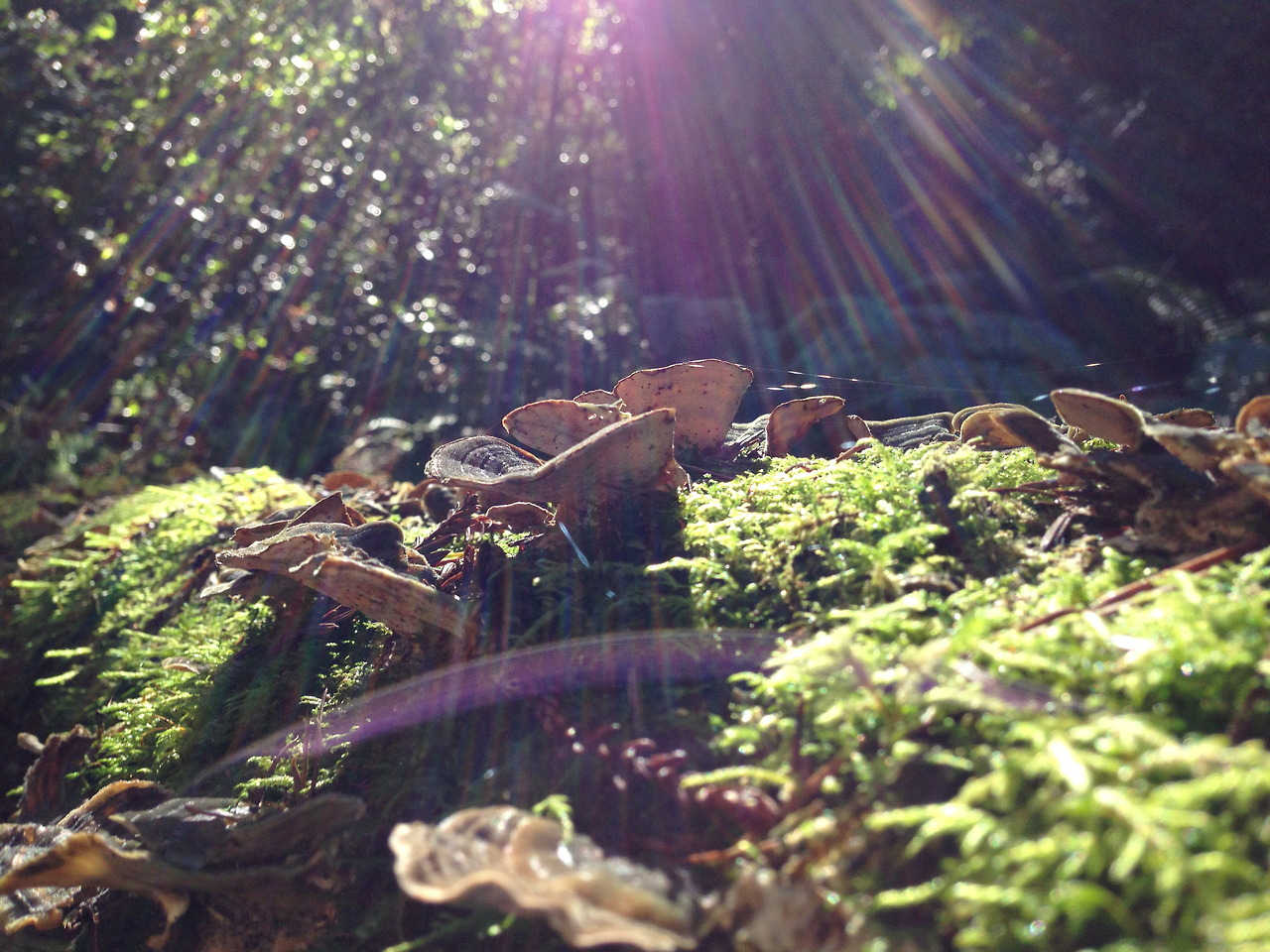 I found some mushrooms in Heritage Grove, La Honda, California.