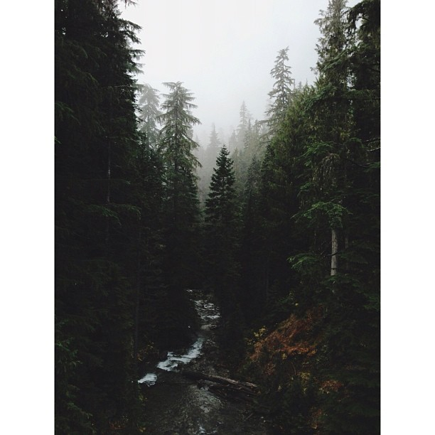 kevinruss :     at Mt Rainier National Park