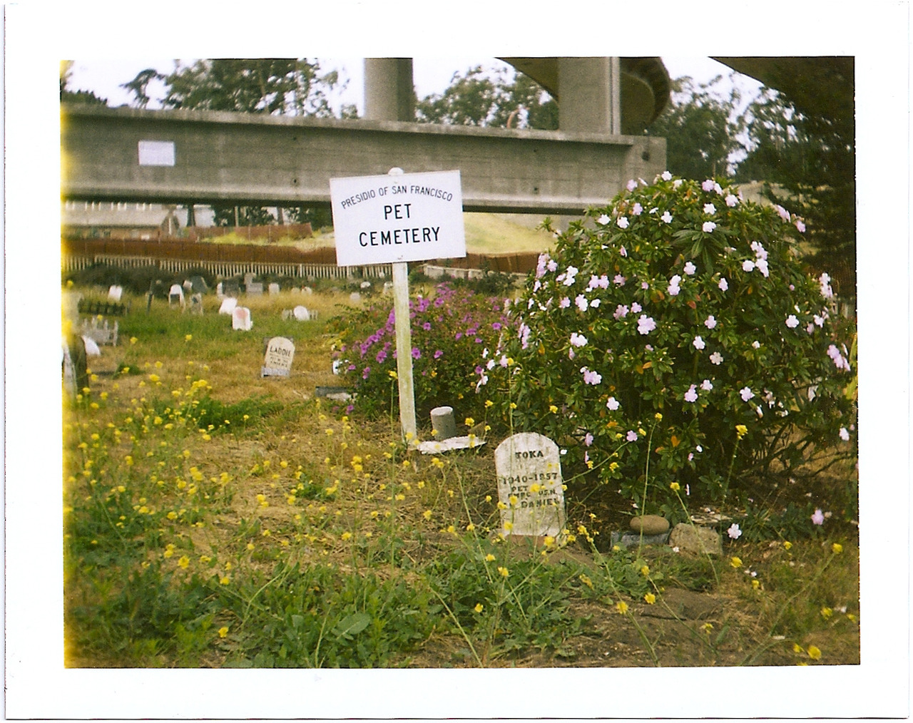 polaroidsf: Pet Cemetery