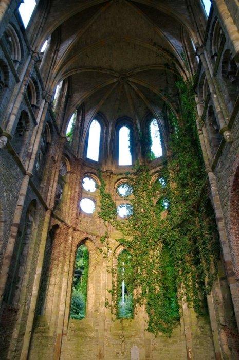 sunsurfer :       Ivy Cathedral, Villers-la-Ville Abbey, Belgium       photo via xenabitesback