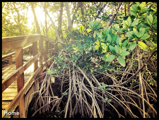 Greynolds Park, North Miami Beach