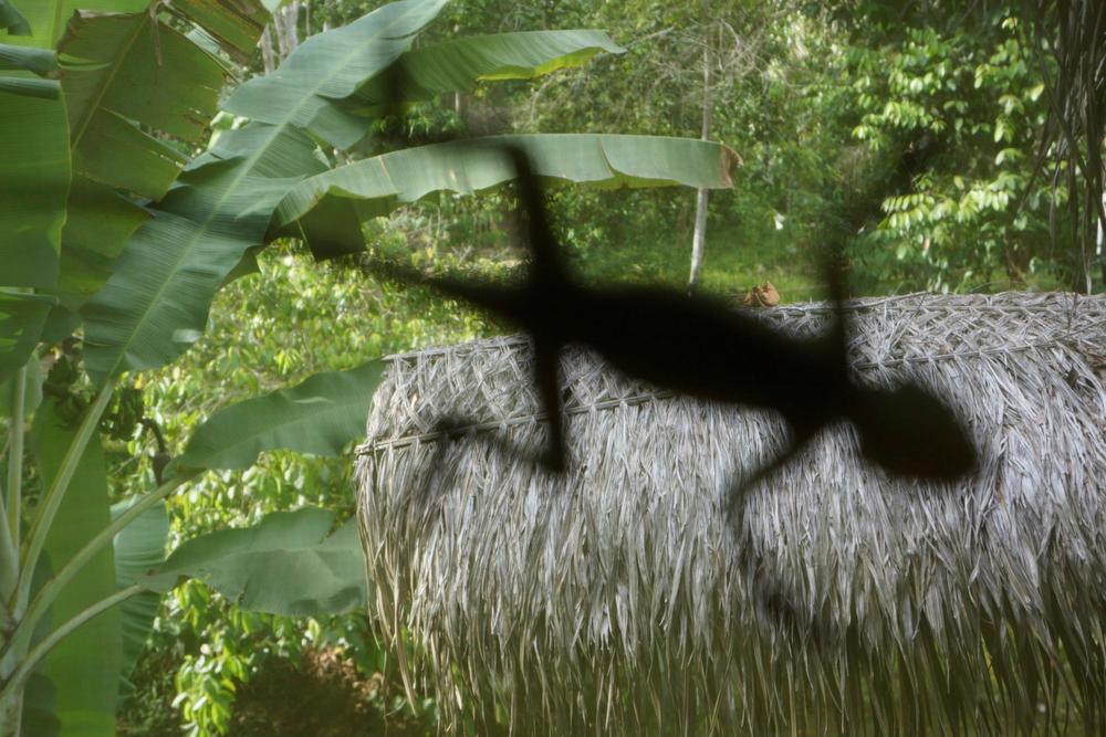 geckoshadow.jpg