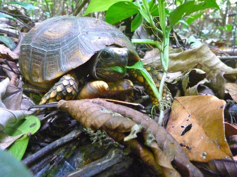 tortoiseeating.jpg