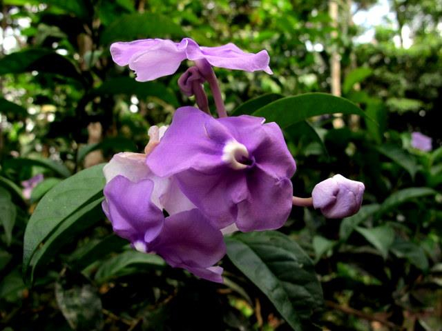 purpleorchid.jpg