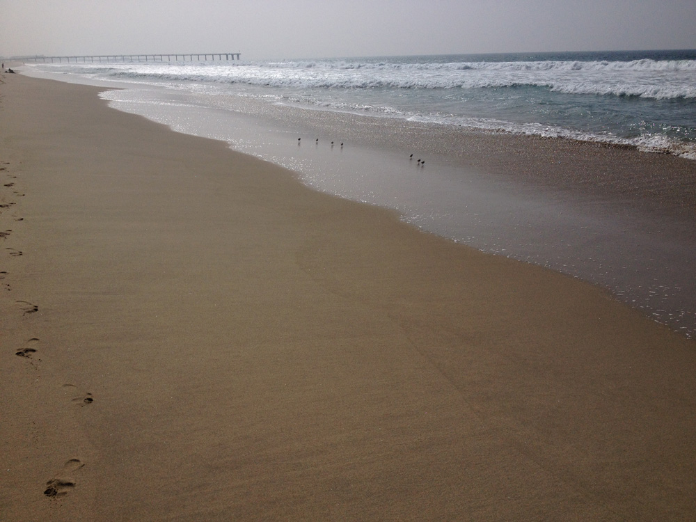 Beach_Birds_Footprints.jpg