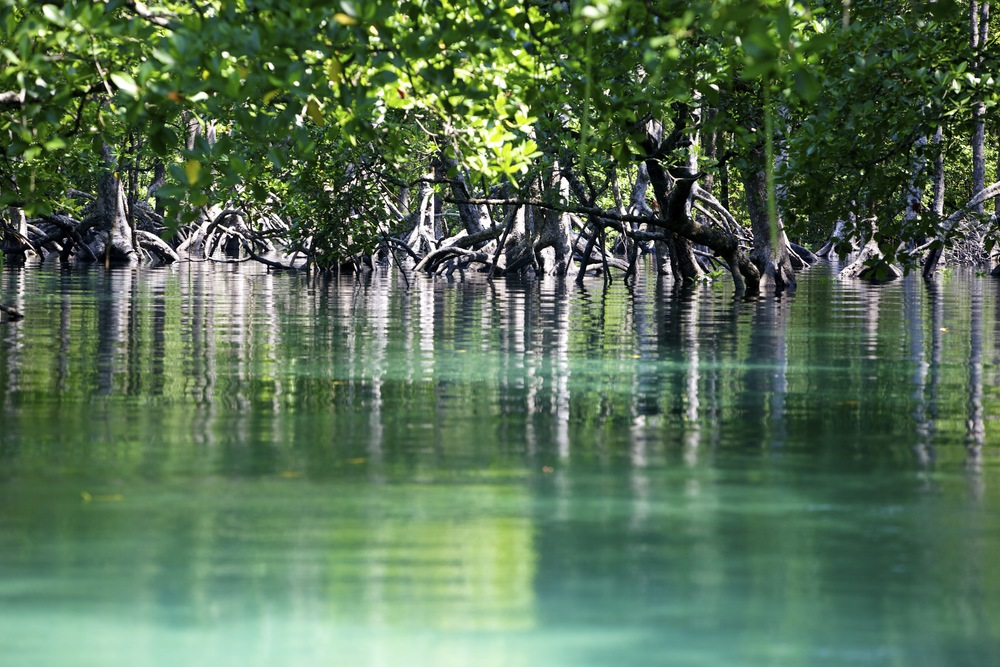 Mangrove forest on Lampi Island
