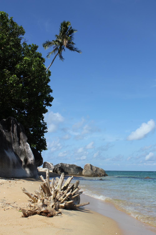 Tioman Island beach.jpg