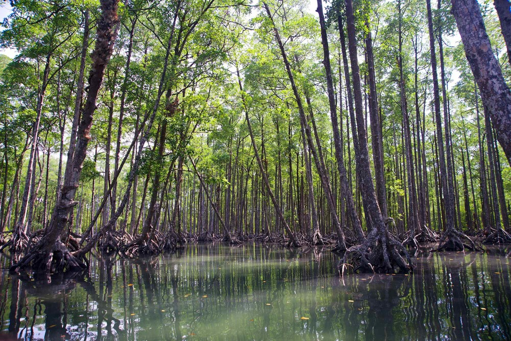 BB_Mergui_Mangroves.jpg