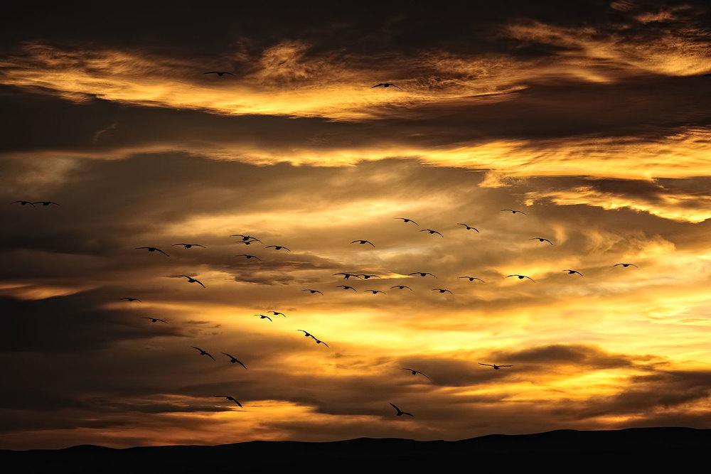 2010-1220_NM_BosqueNWR_CranePonds_Sunset_019v2.jpg