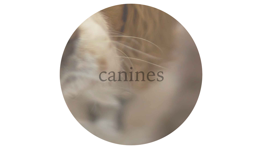 canines.jpg
