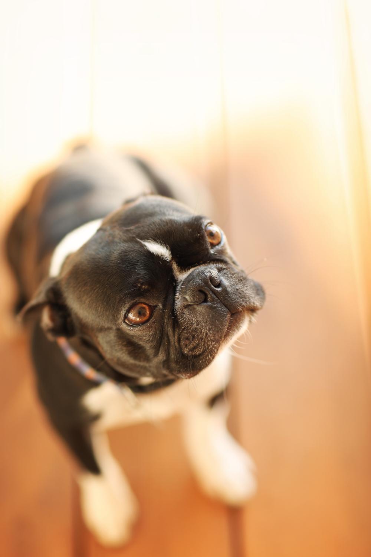 mccuskerdog1.jpg