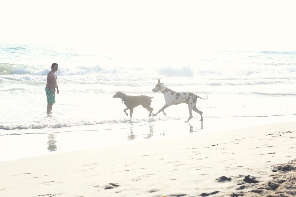 dogbeach.jpg
