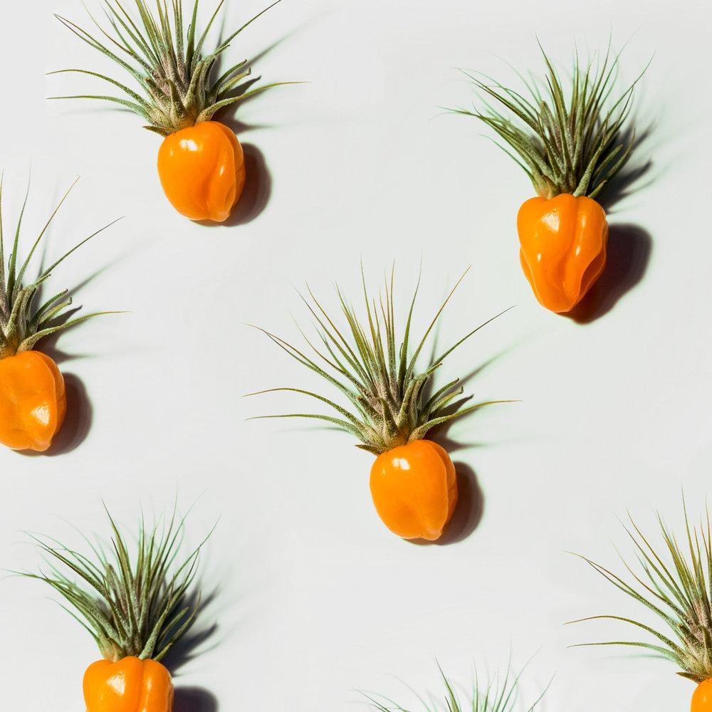 fruit3.jpg