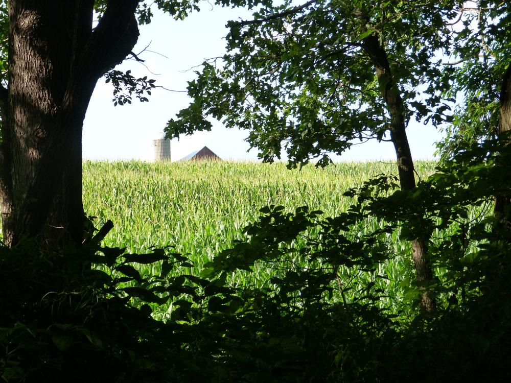 Indiana corn.