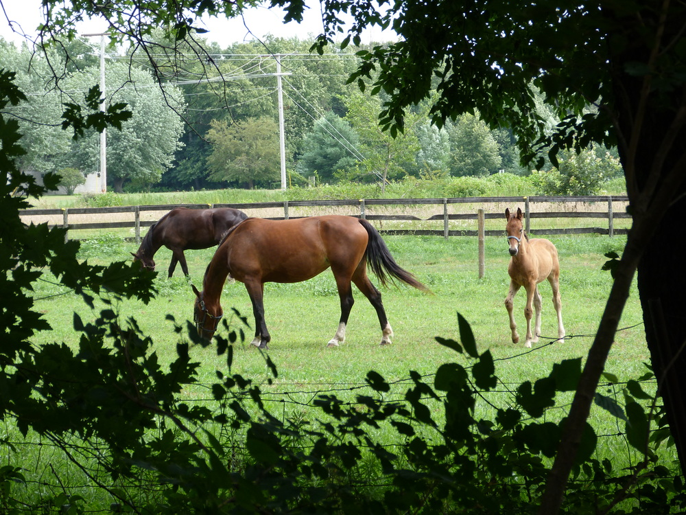 Horses by trailway.