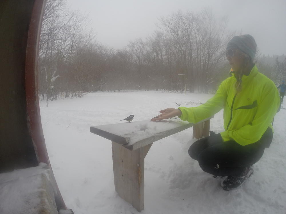 Through out the trails there are small huts with snacks and bird seed so you can take a break, refuel, and feed the plump chickadees that are all too familiar with eating from human hands.