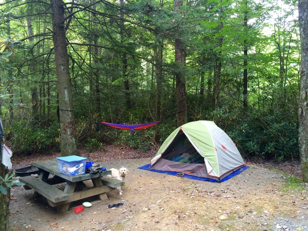 Our single night camp spot in Bear Tree campground.