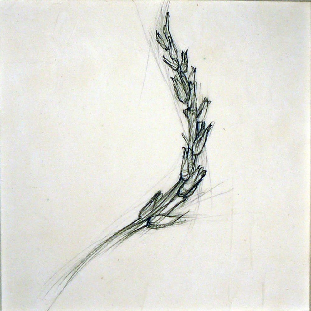 Fragment  , Ellen Lewis Watson  Graphite on Paper