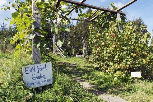 permaculture-garden-sterling-college-vermont.jpg.492x0_q85_crop-smart.jpg