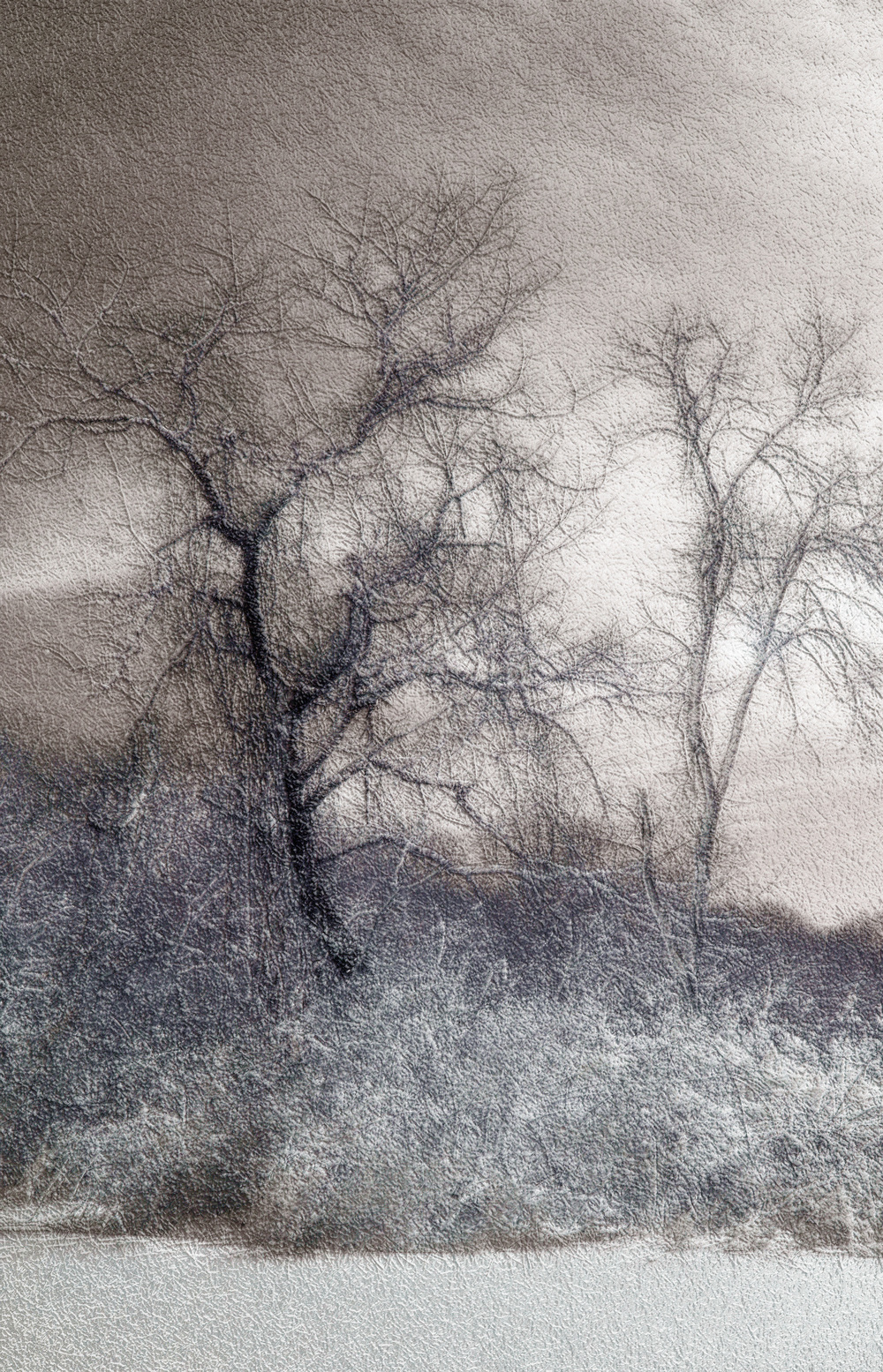 "Great Neck Snow Trees 04,     Harvey Goldman, 2014    26"" x 36,"" Digital Print, 1/20"