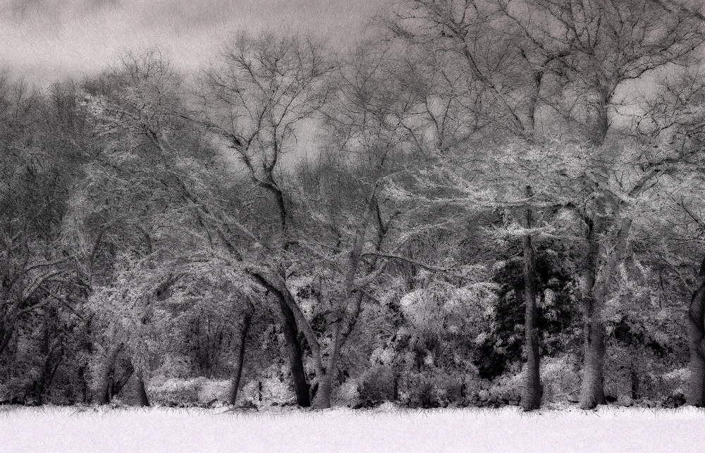 "Great Neck Snow Trees 07,     Harvey Goldman, 2014    26"" x 36,"" Digital Print, 1/20"