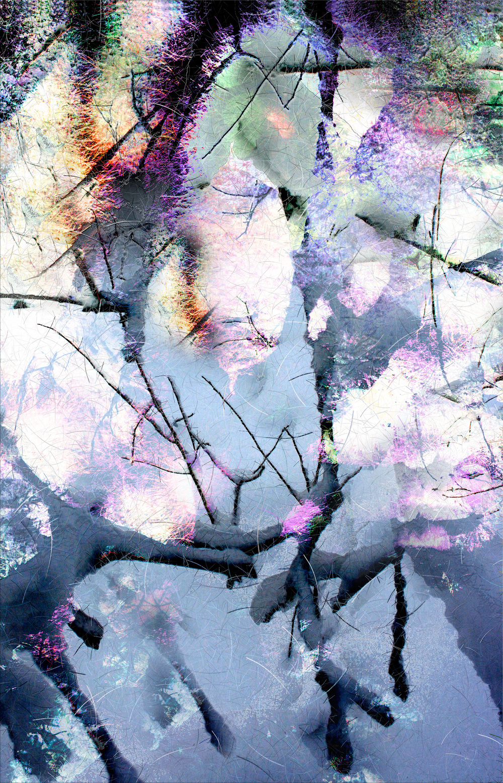 "Snow 02,    Harvey Goldman, 2013   26"" x 36,"" Digital Print, 1/20"