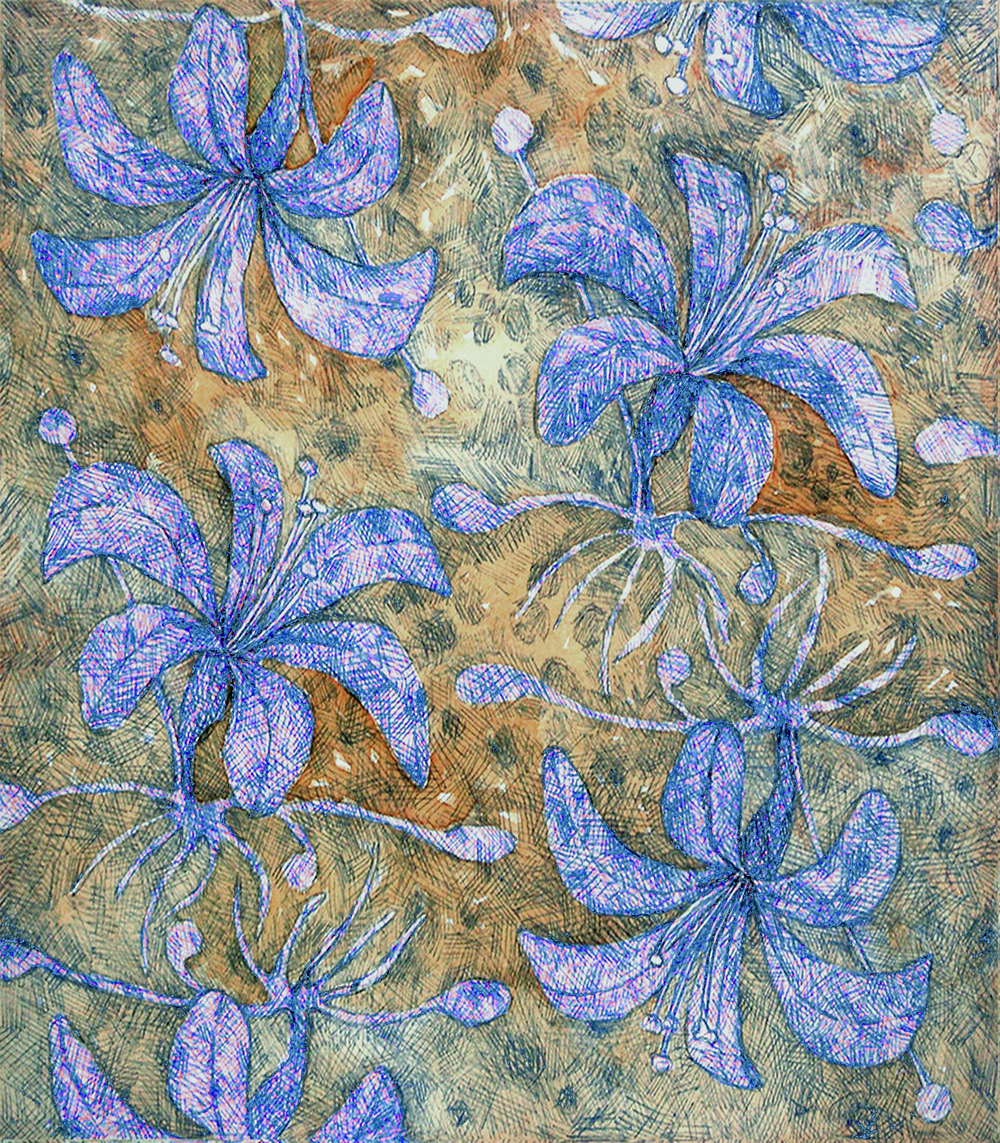 Agapanthus    Pat Coomey Thornton  drawing