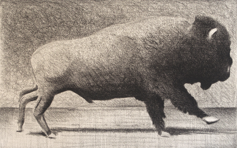 "Bison     Andrew Nixon, 2014    21"" x 37,""     conte on paper"