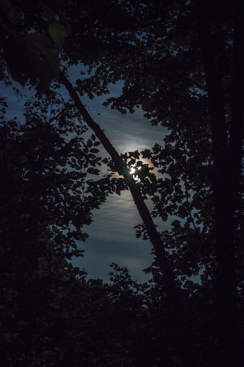 Moonlite Sky through Silhouetted Woods