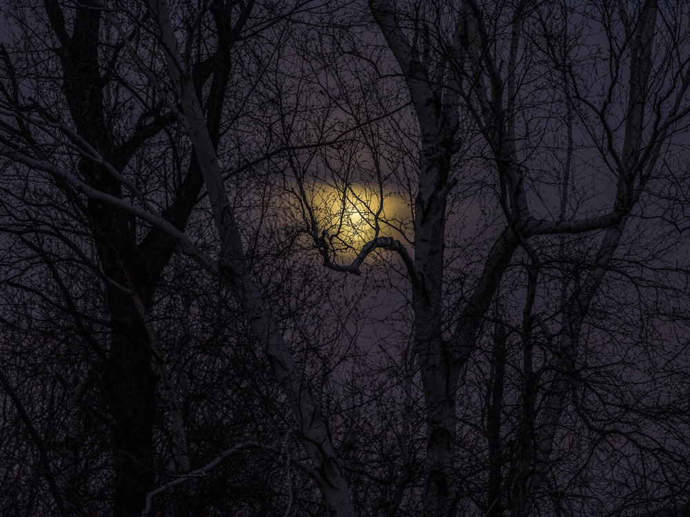 Moon through Dark Trees, Williamstown, MA