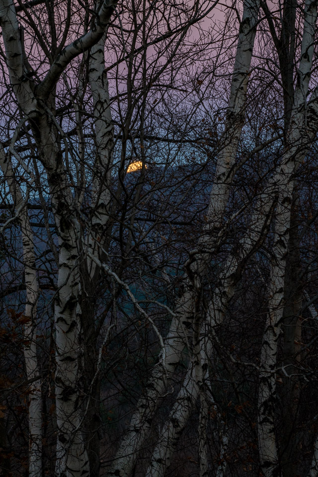 Moonrise, Twilight & Birches, Williamstown, MA